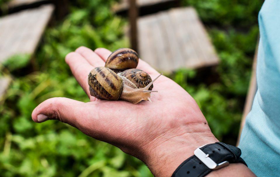 Як працює равликова ферма у селищі під Луцьком