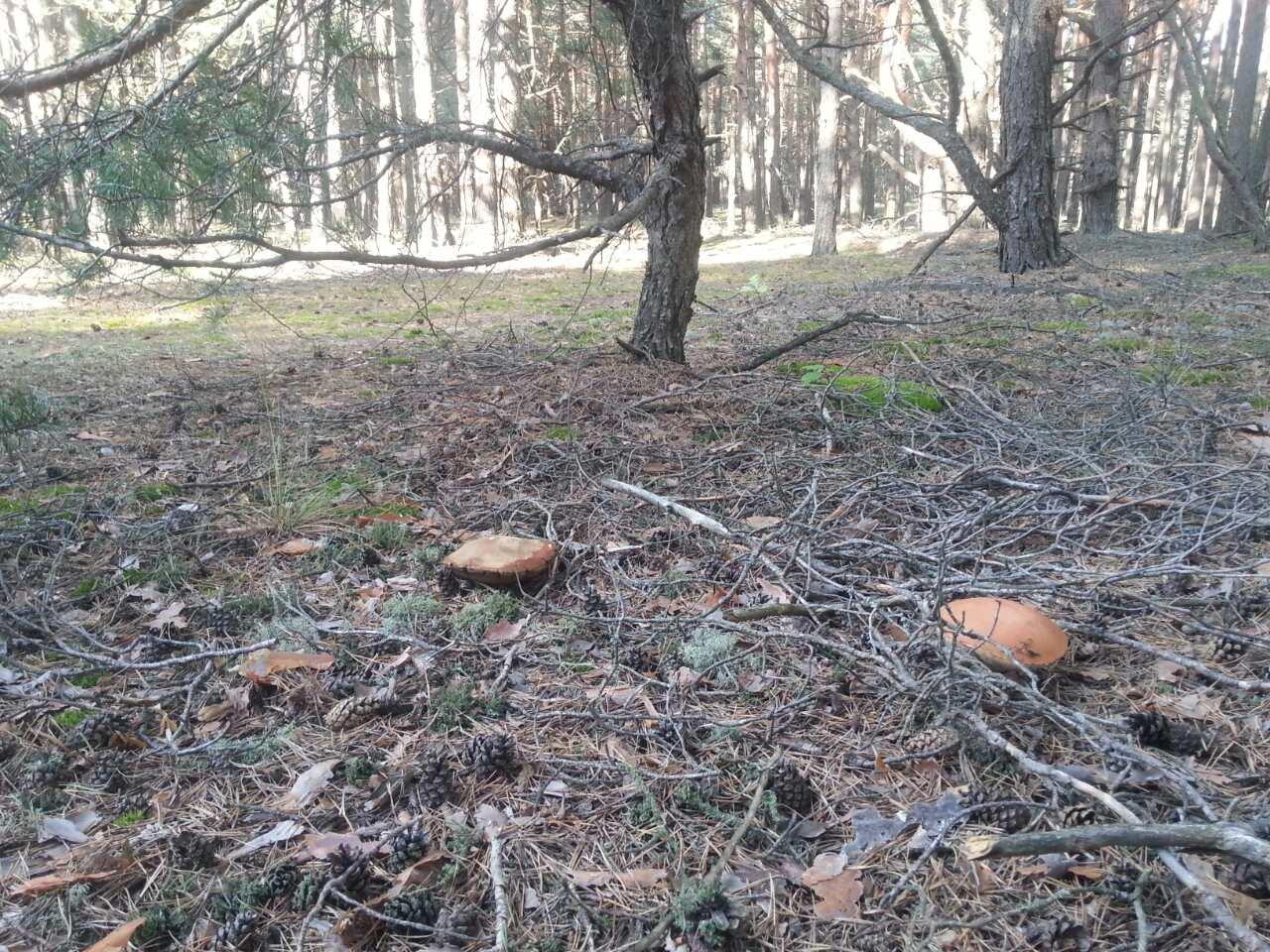 За ранок – два відра грибів: лучанка показала лісові трофеї. ФОТО