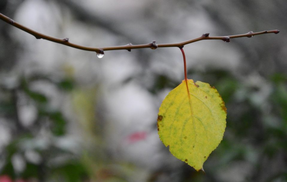 Якою буде погода на Волині 2 жовтня