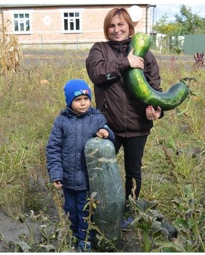 Метр і більше завдовжки: на Волині вирощують кабачки-гіганти. ФОТО