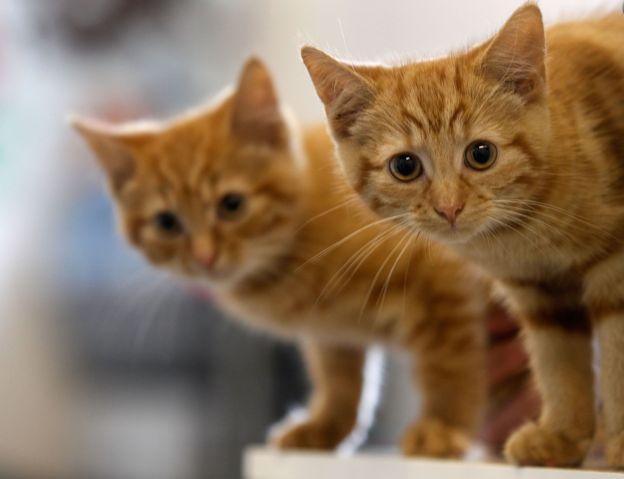 Волинянина підозрюють у вбивстві котів