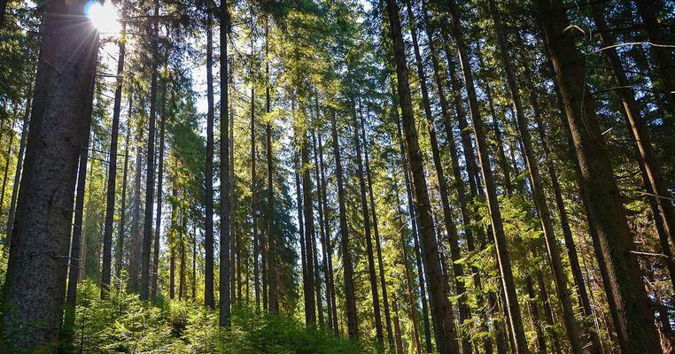Державі повернули лісовий фонд вартістю 70 мільйонів