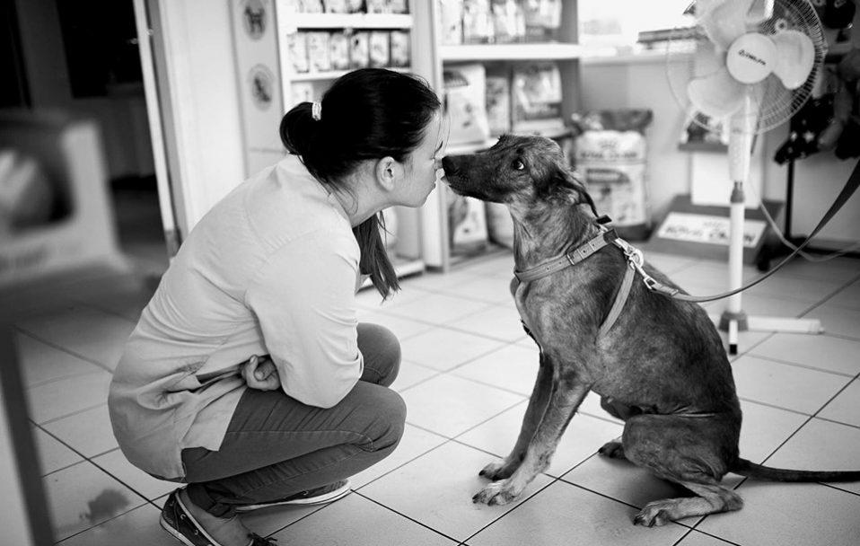 Я пам'ятатиму тебе завжди: у Луцьку померла собака Белла