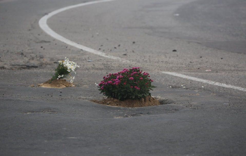 У ямах на дорозі лучани посадили квіти. ФОТО