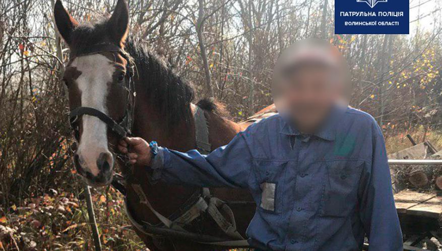 Курйоз на трасі: волинські патрульні зловили коня, який втік від господаря. ФОТО