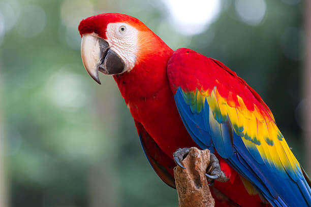 З Луцького зоопарку вкрали папуг
