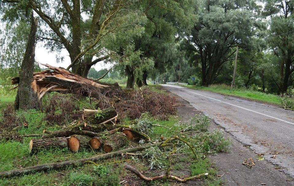 На Волині пронісся буревій: дерево впало на гуртожиток. ФОТО