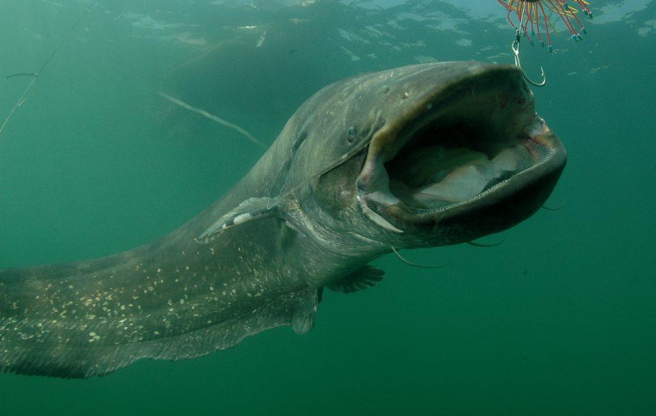26-кілограмовий трофей: проректор волинського вишу похвалився рибним уловом. ФОТО