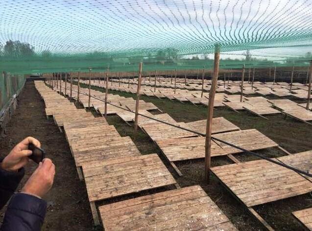 На Горохівщині працює равликова ферма. ФОТО