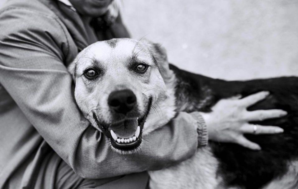"""""""Бадді – ідеальний собака: у Луцьку псу шукають сім'ю. ФОТО"""