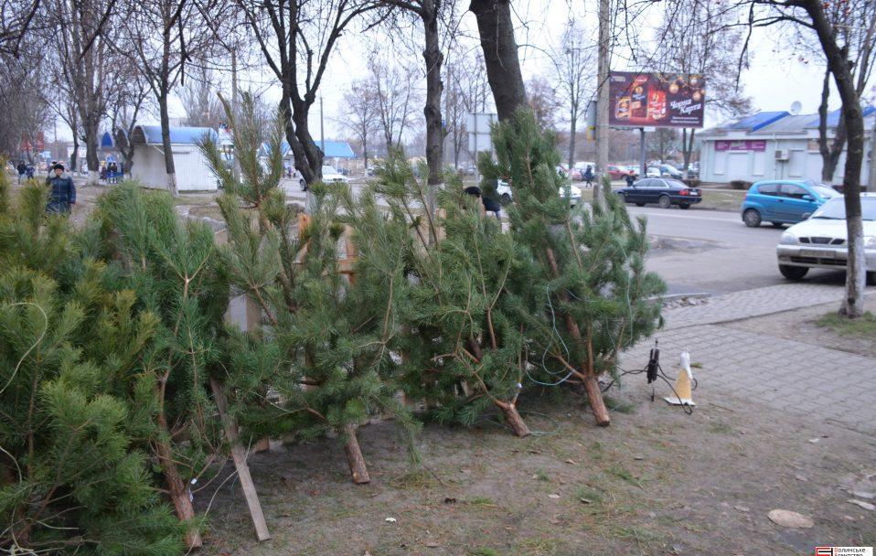 Де у Луцьку продаватимуть новорічних красунь