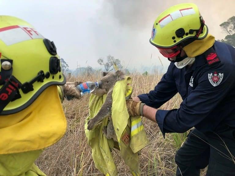 """Континент не горить, люди далі ходять на роботу і """"жруть"""" в ресторанах, – українець про пожежі в Австралії"""