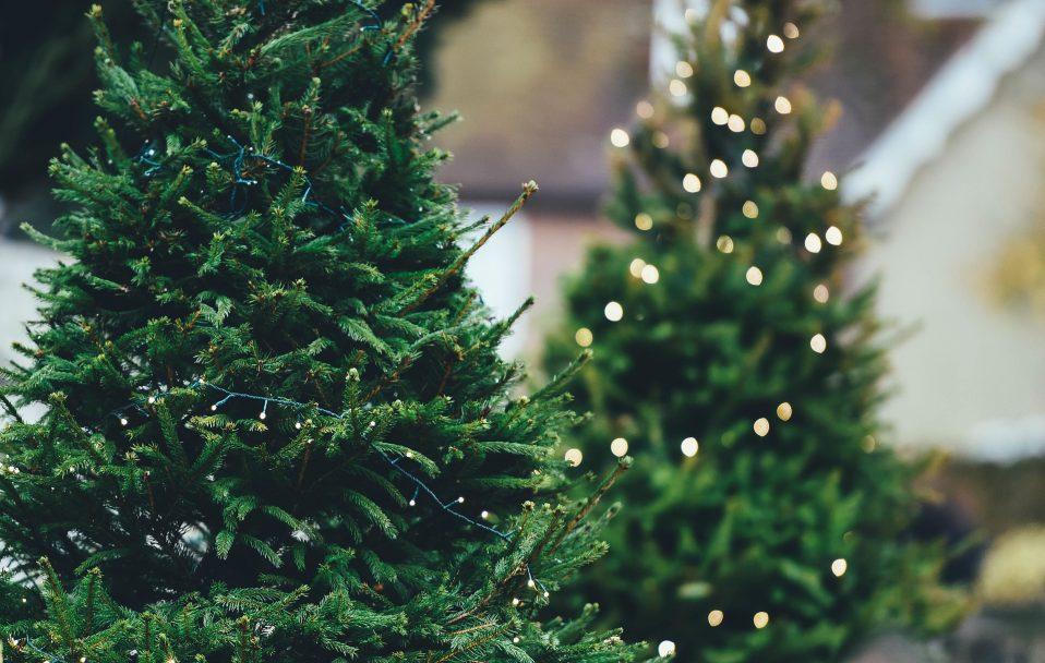 Куди лучанам подіти новорічні ялинки