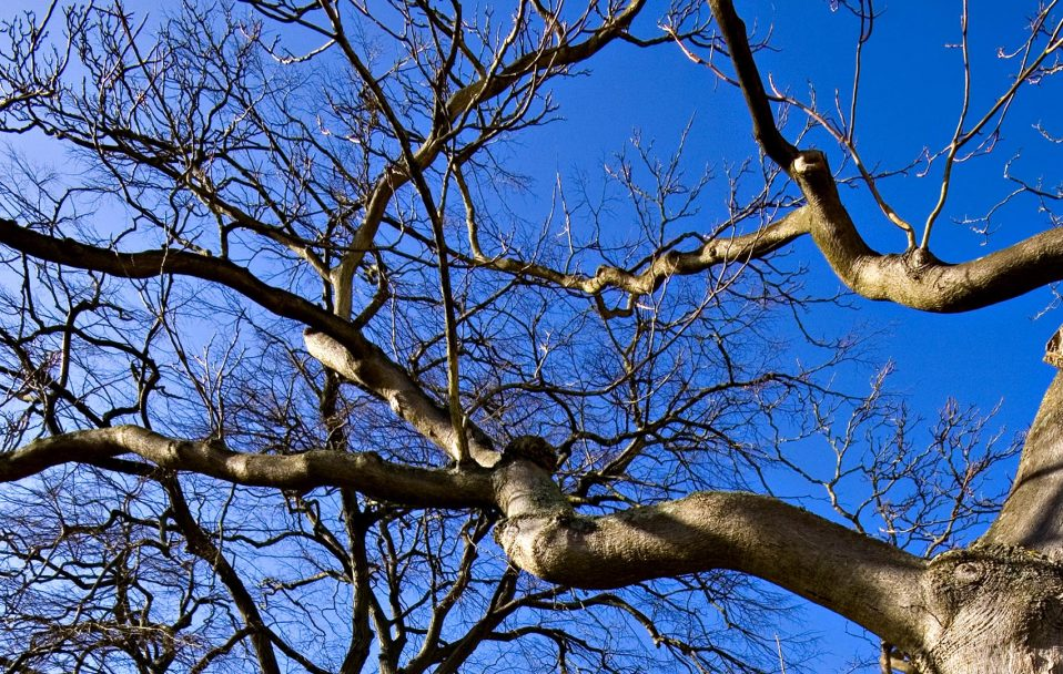 У Луцьку чоловік впав з дерева і загинув