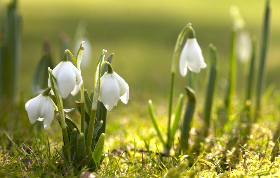 Якою погодою Волинь зустріне весну