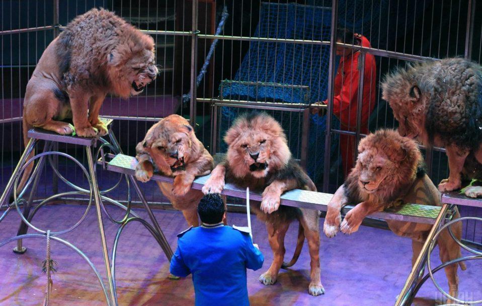 Луцькому зоопарку хочуть передати тварин із Національного цирку України