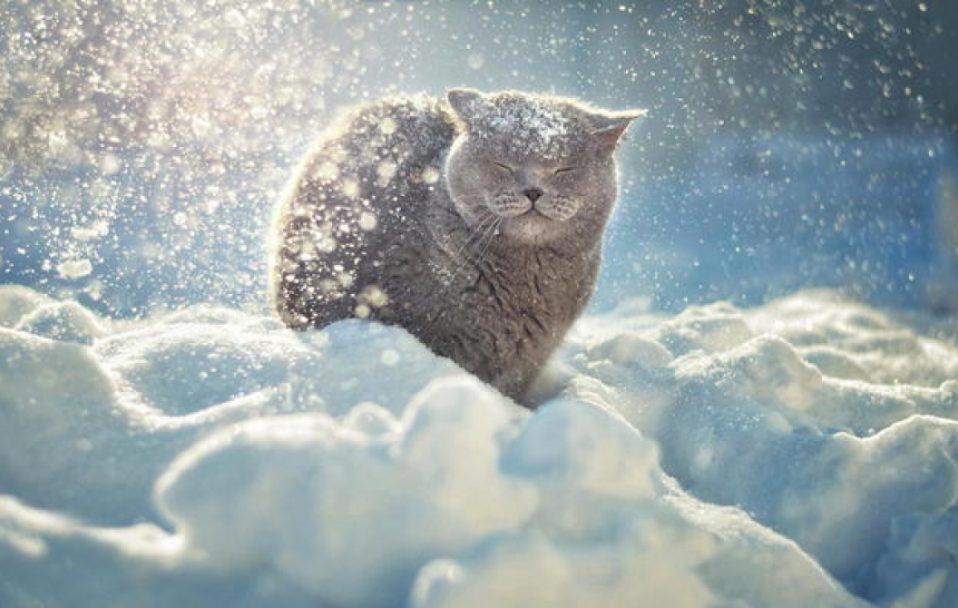 На Волині знизиться температура і сніжитиме