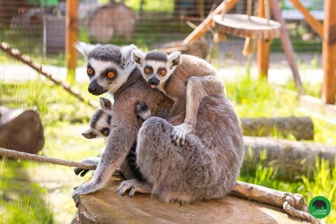 8 березня вхід в Луцький зоопарк для жінок – безплатний