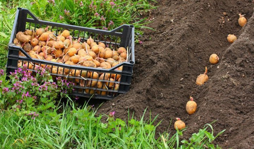 Садити картоплю вже можна: якої погоди чекати волинянам у квітні