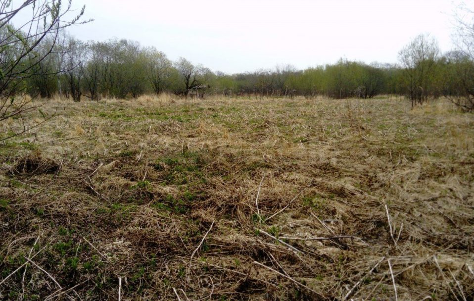 На 3 гектарах біля Світязя зняли родючий шар ґрунту