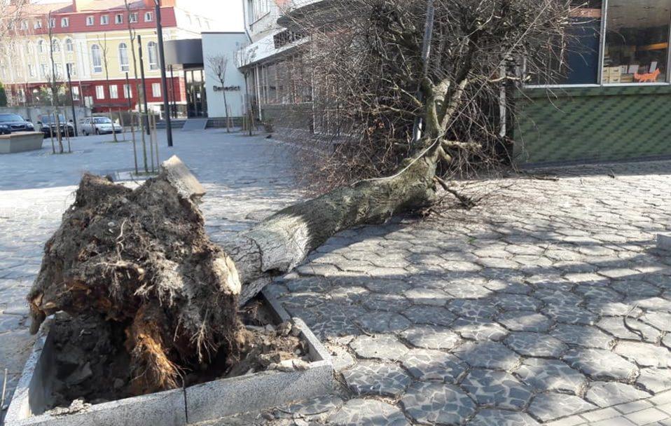 У центрі Луцька на магазин впало дерево. ФОТО