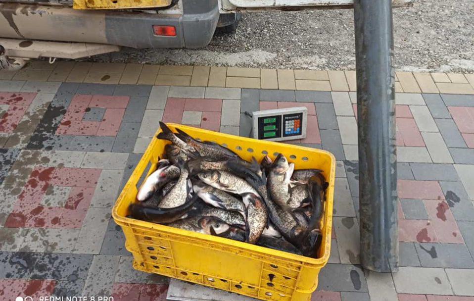 300 кілограмів товстолоба випустили у канали парку в Луцьку. ФОТО. ВІДЕО