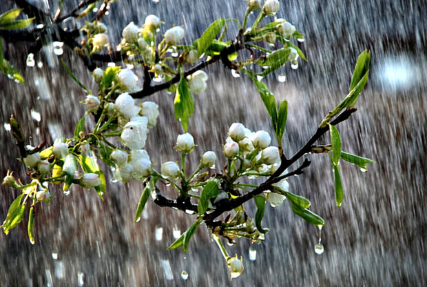 На вихідних по всій Волині прогнозують дощі