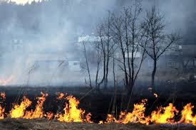 Ліси, торфовища, суха трава: за добу на Волині – 17 пожеж