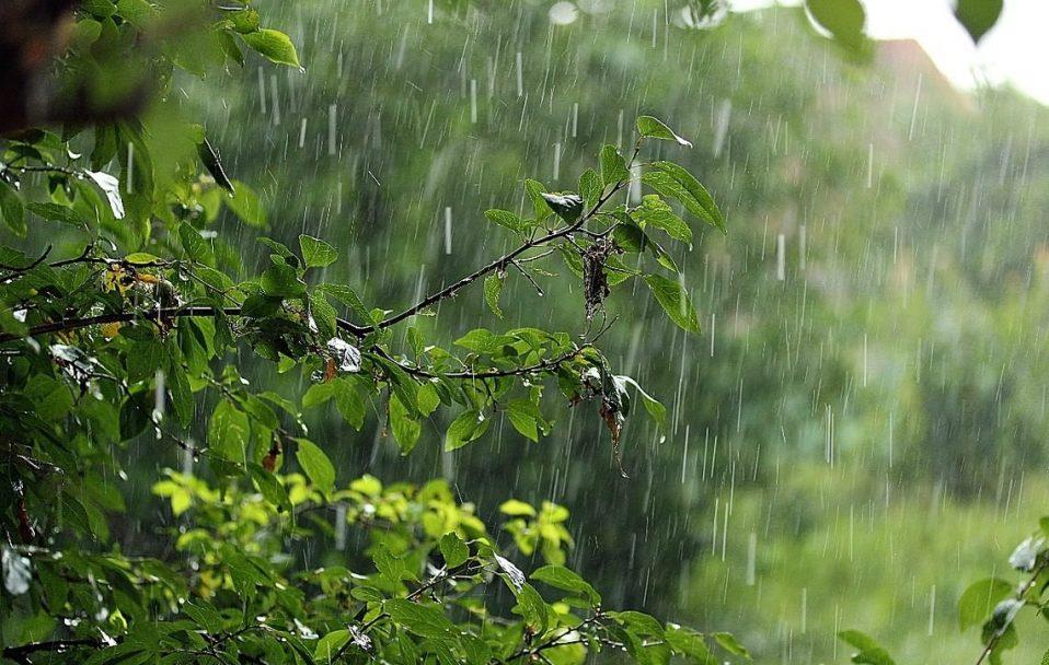 Яку погоду прогнозують на Волині на початок серпня