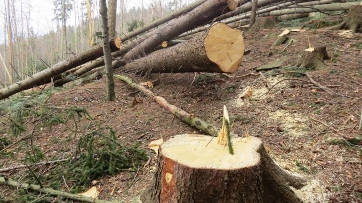 Трагедія на Волині: на чоловіка впало дерево