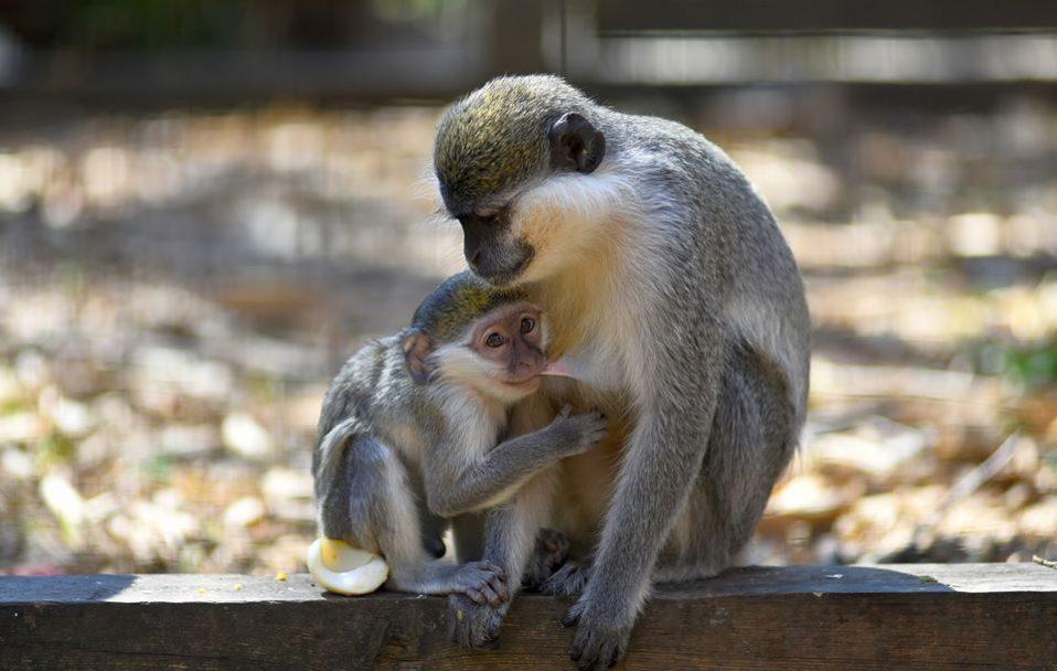 У Луцьку з 12 травня запрацює зоопарк