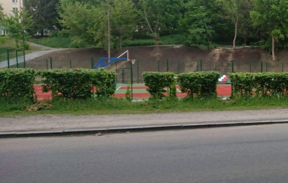 Висадили минулого тижня: у Луцьку покрали туї. ФОТО