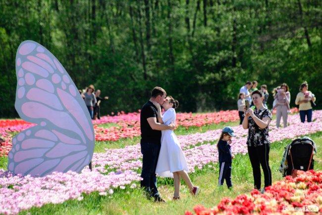 На Волині – фестиваль тюльпанів. ФОТО