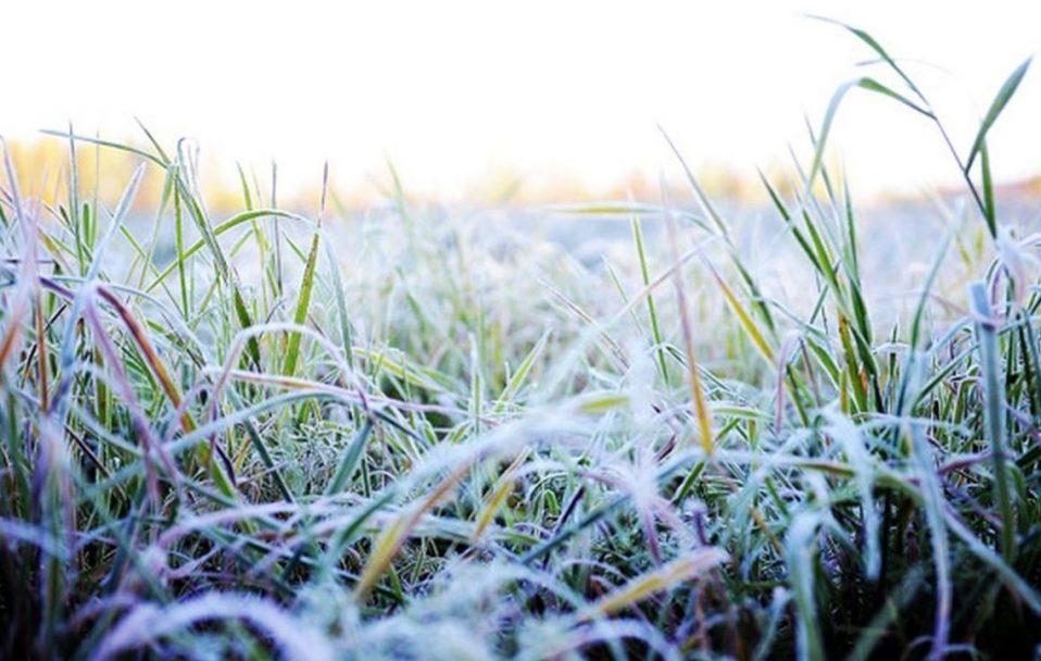 На Волині прогнозують заморозки