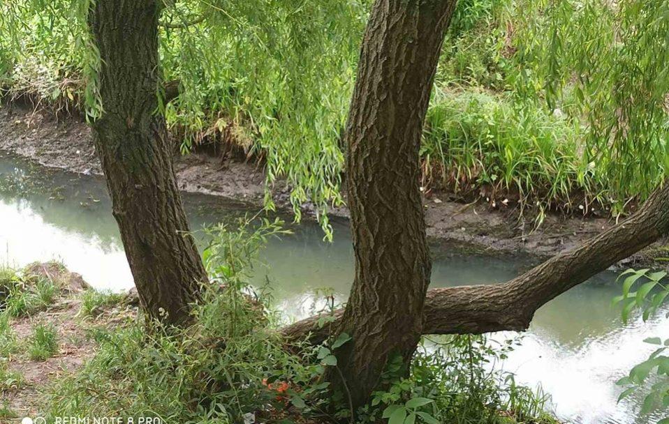 Через вандалів обміліла водойма у луцькому парку