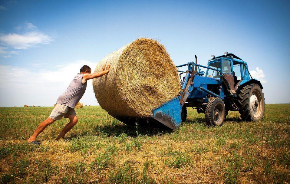 Сьогодні, 19 червня, в Україні вперше святкують День фермера
