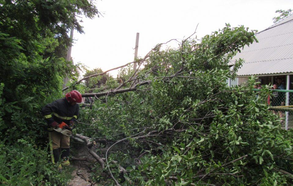 Наслідки негоди на Волині: вирвані з корінням дерева і затоплений будинок