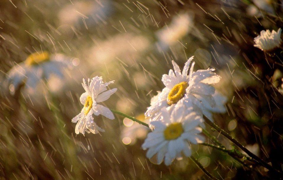 На Волині прогнозують спеку, дощі і град