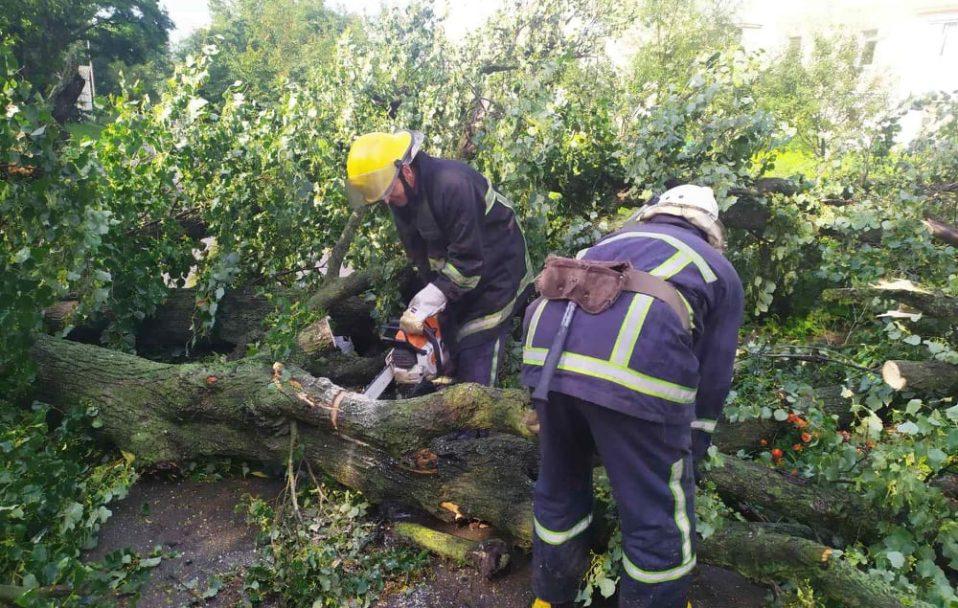 Під час негоди на Волині 16 дерев впали на дорогу. ФОТО. ВІДЕО