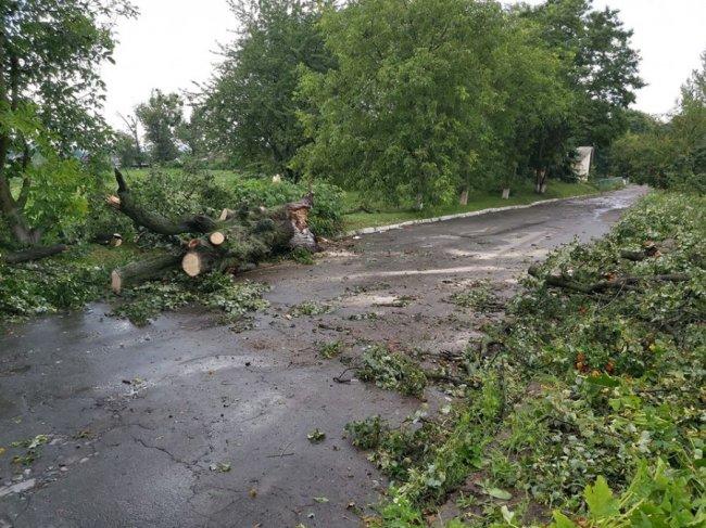 Повалені дерева і зірвані дахи: на Горохівщині вирувала негода. ФОТО