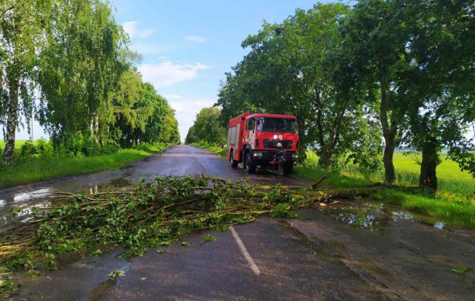 На Волині дерево повалилося на дорогу