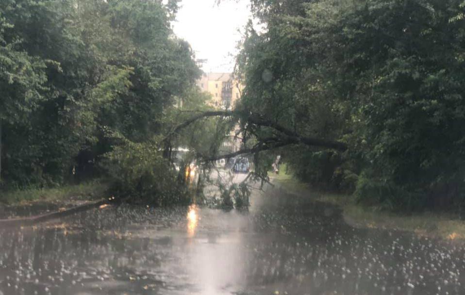 У Луцьку дерево впало на дорогу