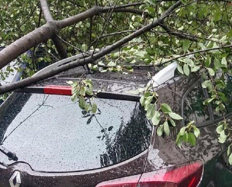 У Луцьку дерево впало на припаркований автомобіль. ФОТО