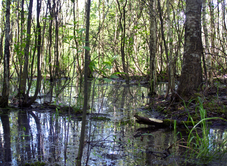 На Волині рятували жінку, яка не могла вибратися із болотяного лісу. ФОТО