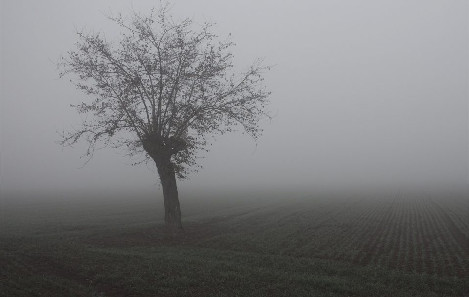 Волинян попереджають про дощ і сильний туман