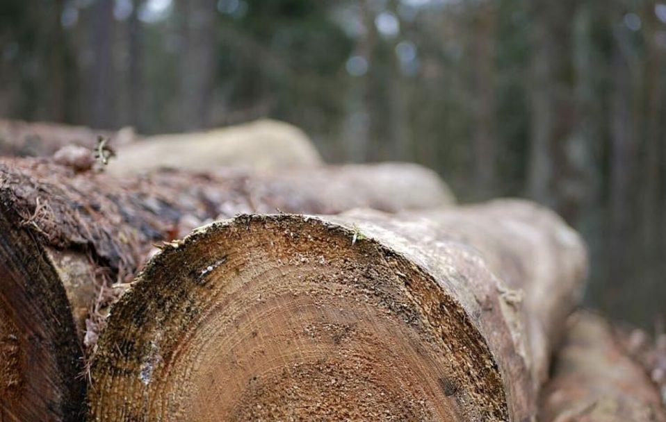 На Волині зловили крадія лісу. ФОТО
