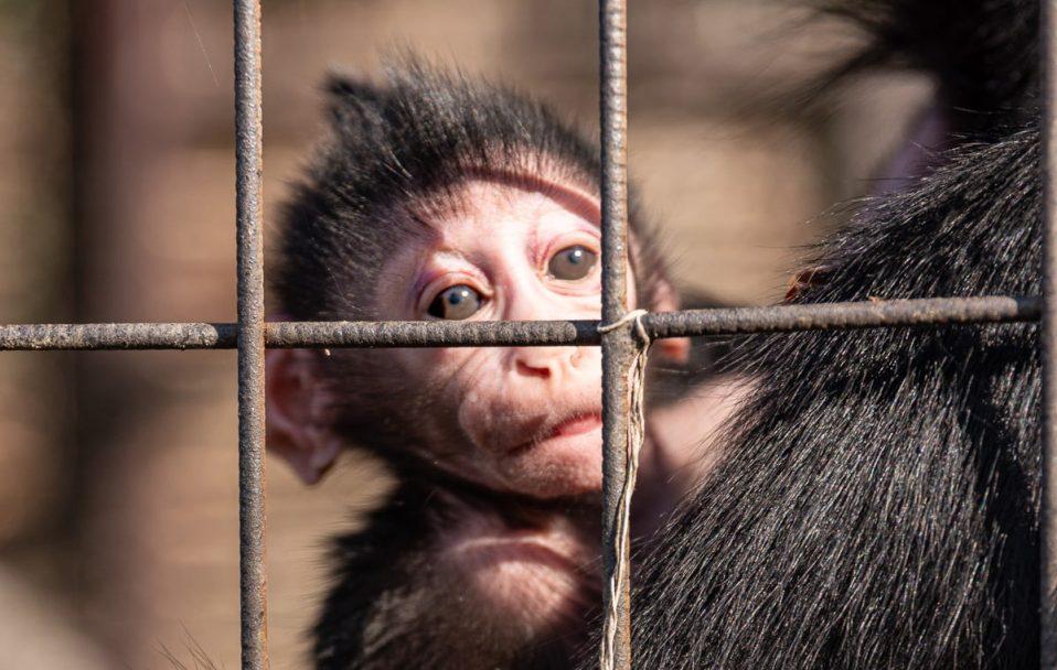 Поповнення зоопарку: у Луцьку народилося мавпеня. ВІДЕО