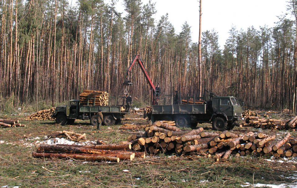 """Працівник лісгоспу на Волині """"прорахувався"""" і дозволив зрізати частину лісу. Збитки – 1 200 000 гривень"""