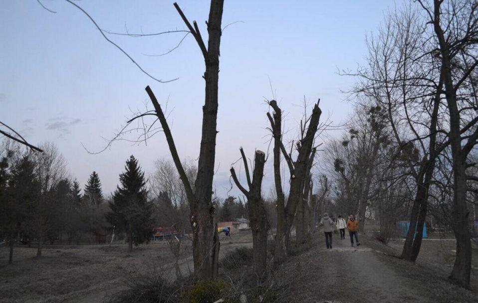 Деревам дали спокій: у Луцьку запровадили мораторій на кронування