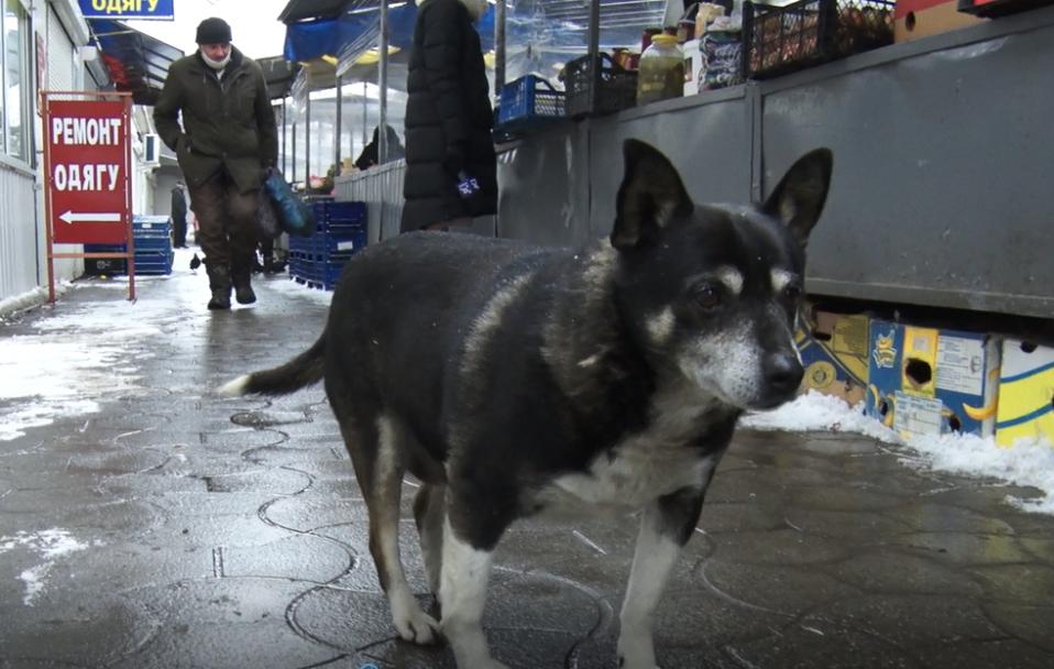 """На ринку """"Лучеськ"""" конфлікт через будки для собак. ВІДЕО"""
